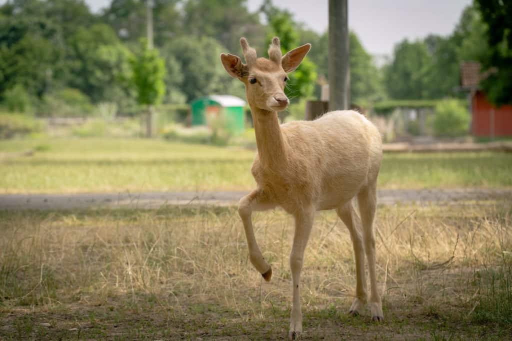 Mundenhof Tierpatenschaft Damwild